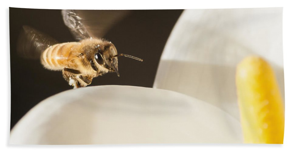 Bee Bath Sheet featuring the photograph Bizzy by Caitlyn Grasso