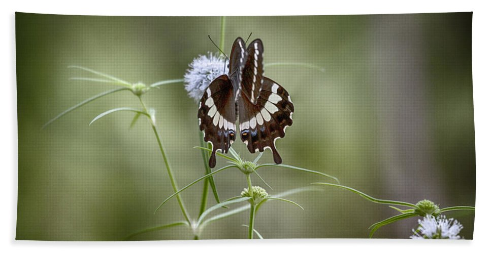 Butterfly Bath Sheet featuring the photograph Black And White Butterfly V2 by Douglas Barnard