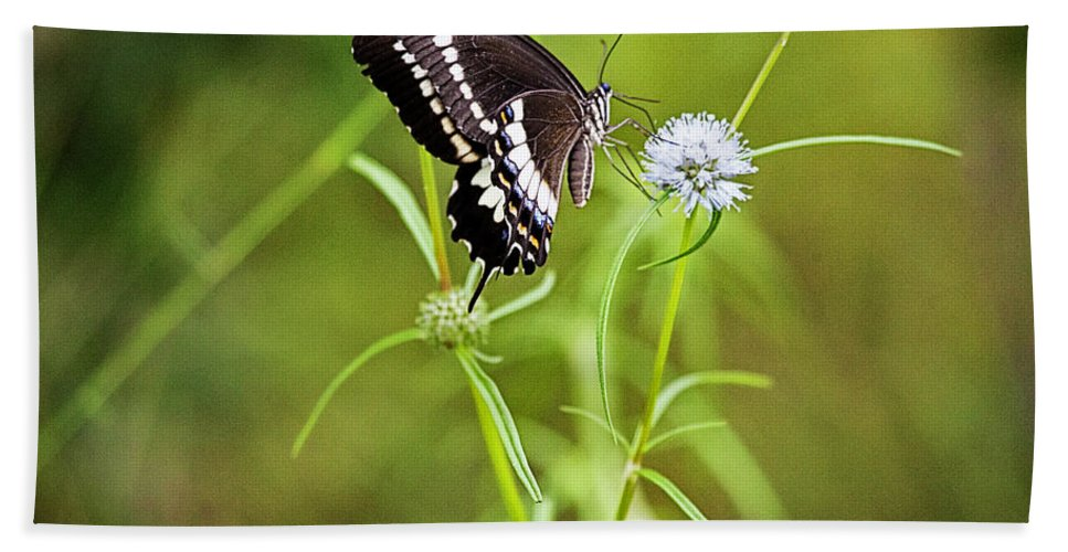 Butterfly Bath Sheet featuring the photograph Black And White Butterfly V3 by Douglas Barnard