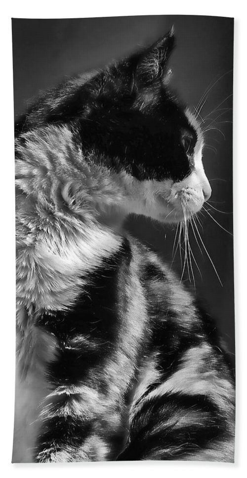 Cat Bath Sheet featuring the photograph Black And White Cat In Profile by Jennie Marie Schell