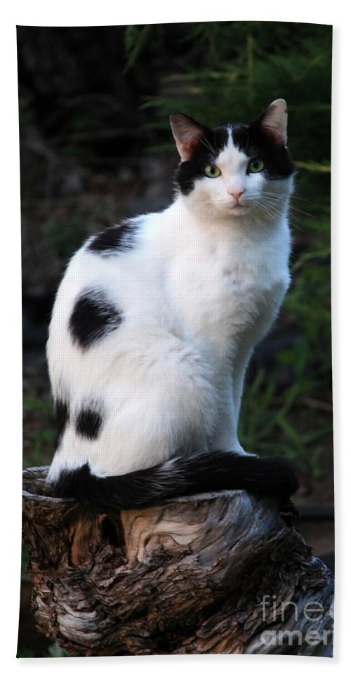 Cat Bath Towel featuring the photograph Black And White Cat On Tree Stump by Carol Groenen