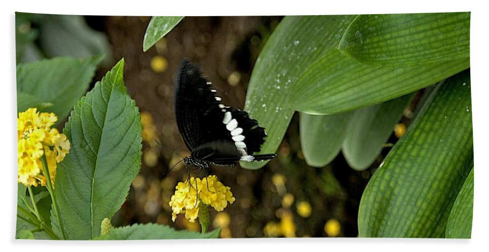 Black Butterfly Hand Towel featuring the photograph Black And White by Joseph Yarbrough