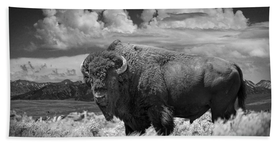 Bison Hand Towel featuring the photograph Black And White Photograph Of An American Buffalo by Randall Nyhof
