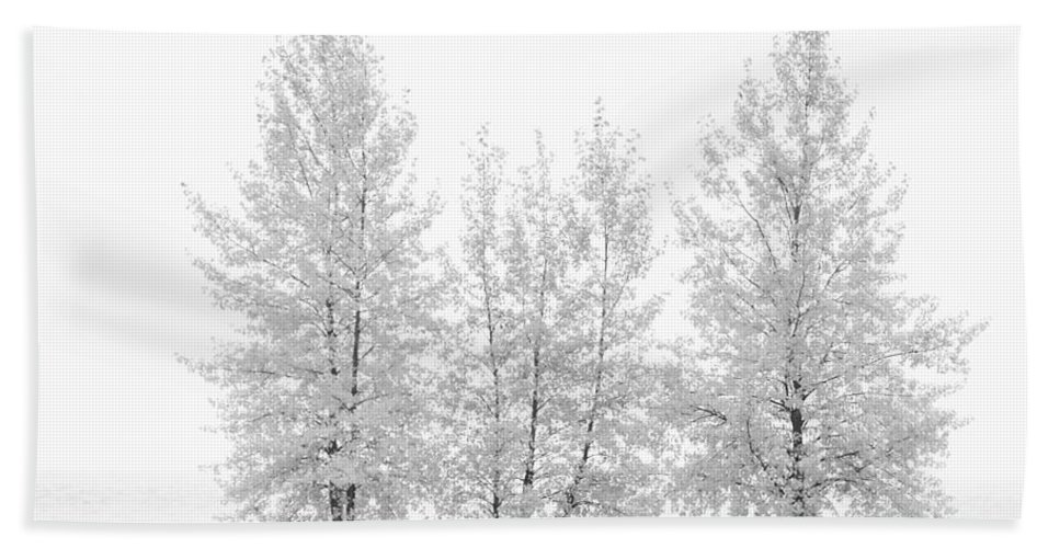 Autumn Hand Towel featuring the photograph Black And White Square Diptych Tree 12-7693 Set 1 Of 2 by U Schade