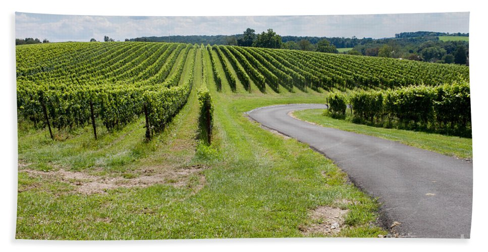 Landscape Hand Towel featuring the photograph Maryland Vinyard In August by Thomas Marchessault