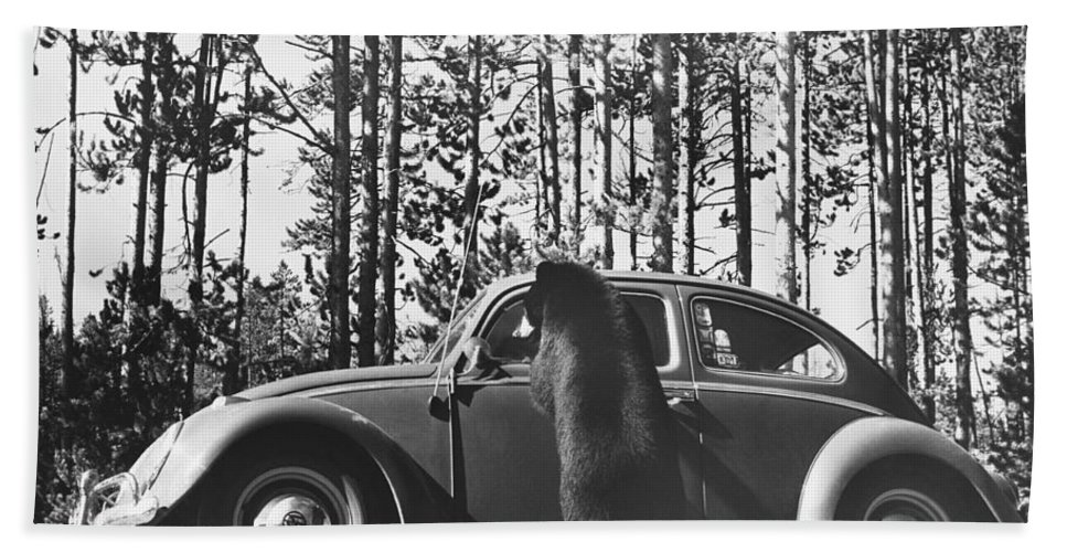 Nature Hand Towel featuring the photograph Black Bear Begging by George Laycock