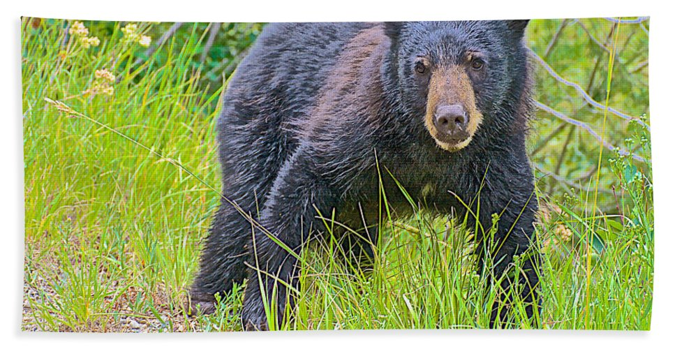 Black Bear Cub Near Road In Grand Teton National Park Hand Towel featuring the photograph Black Bear Cub Near Road In Grand Teton National Park-wyoming by Ruth Hager