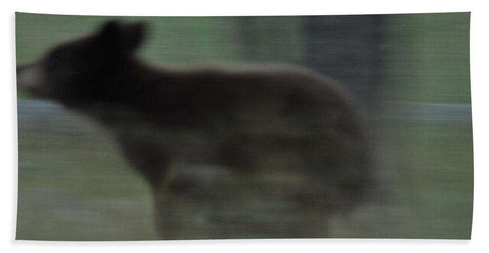 Black Bear Bath Towel featuring the photograph Black Bear Cub Running by Frank Madia