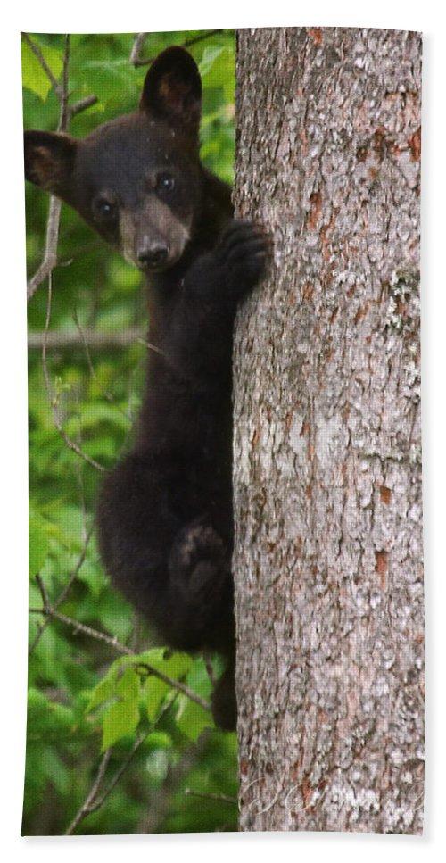 Maine Wildlife Bath Sheet featuring the photograph Black Bear Cub by Sharon Fiedler