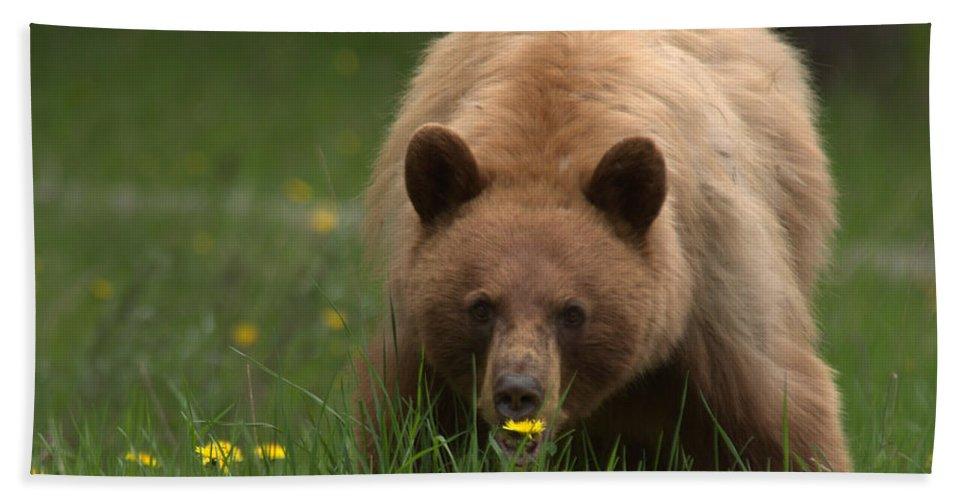 Bear Bath Towel featuring the photograph Black Bear by Frank Madia
