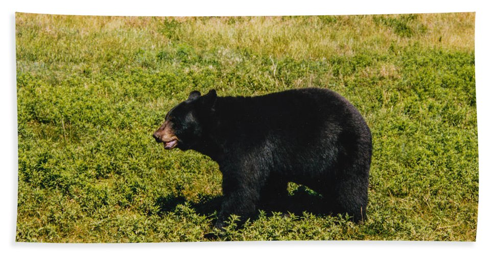 Black Bear Bath Sheet featuring the photograph Black Bear by Tommy Anderson