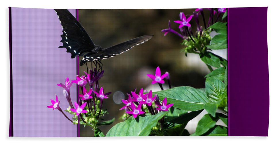 Butterfly Bath Sheet featuring the photograph Black Butterfly 07 by Thomas Woolworth
