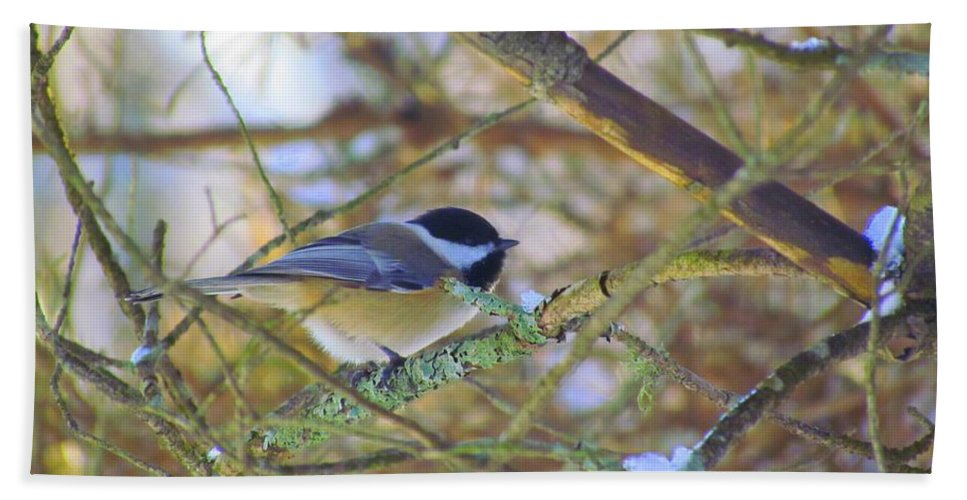 Chickadee Hand Towel featuring the photograph Black-capped Chickadee by Elizabeth Dow