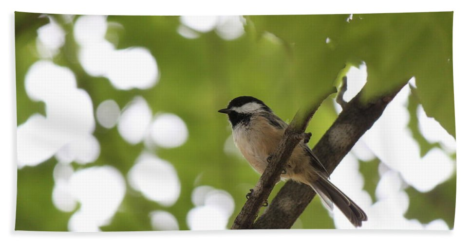 Black-capped Chickadee Bath Sheet featuring the photograph A Ray Of Hope by Jennifer E Doll