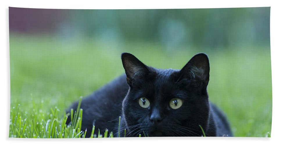 Animal Bath Towel featuring the photograph Black Cat by Juli Scalzi