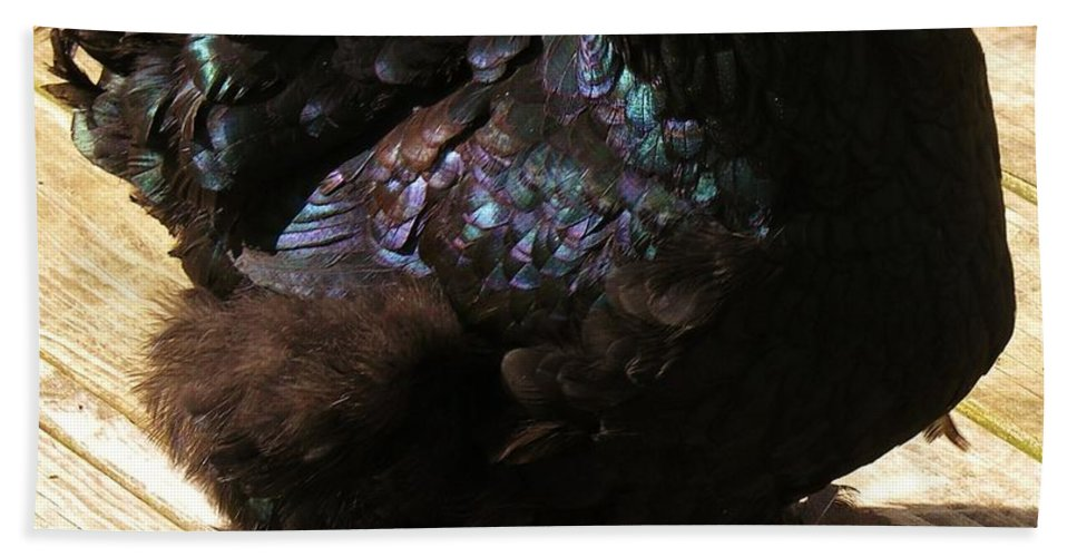 Chicken Bath Sheet featuring the photograph Black Cochin by Sherman Perry