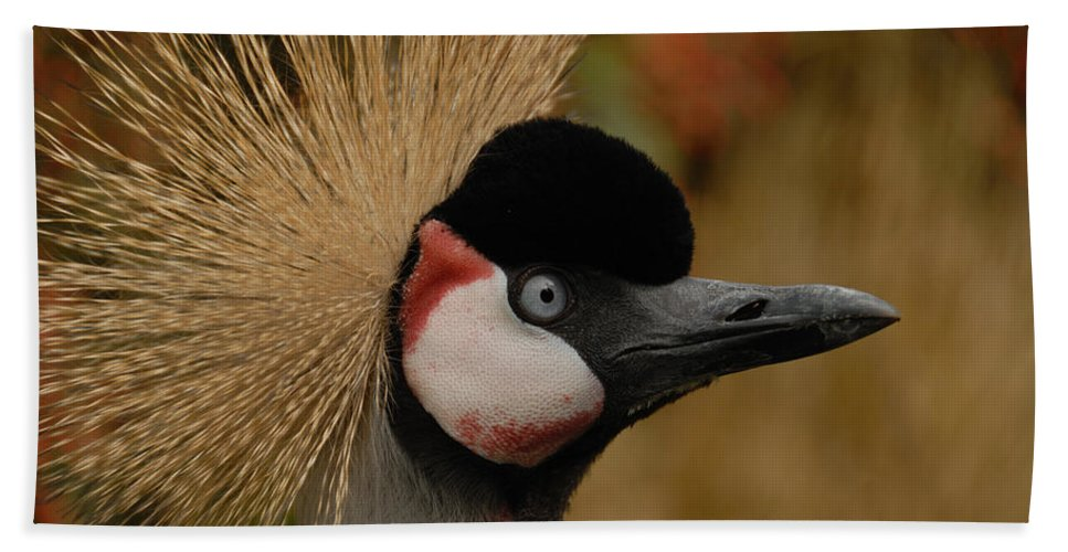 Africa Hand Towel featuring the photograph Black Crowned Crane by TouTouke A Y