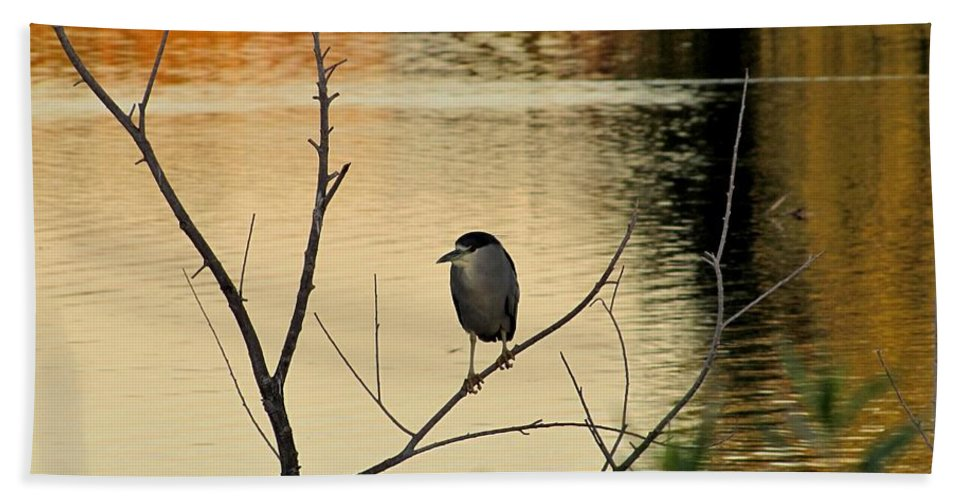 Black-crowned Night Heron Hand Towel featuring the photograph Black-crowned Night Heron by Marilyn Smith