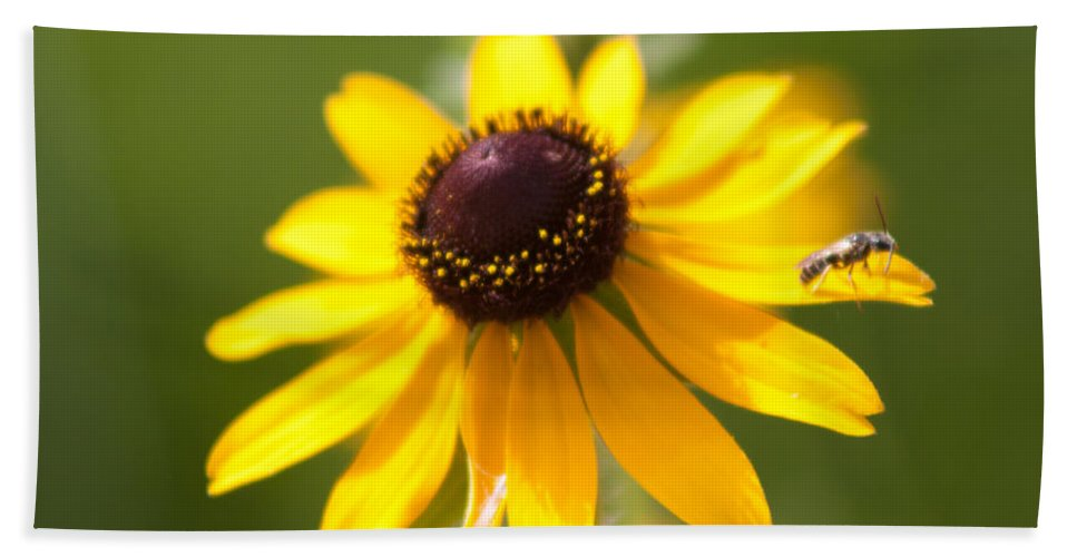 Flora Bath Sheet featuring the photograph Black-eyed Susan With Friend by Lynne Jenkins
