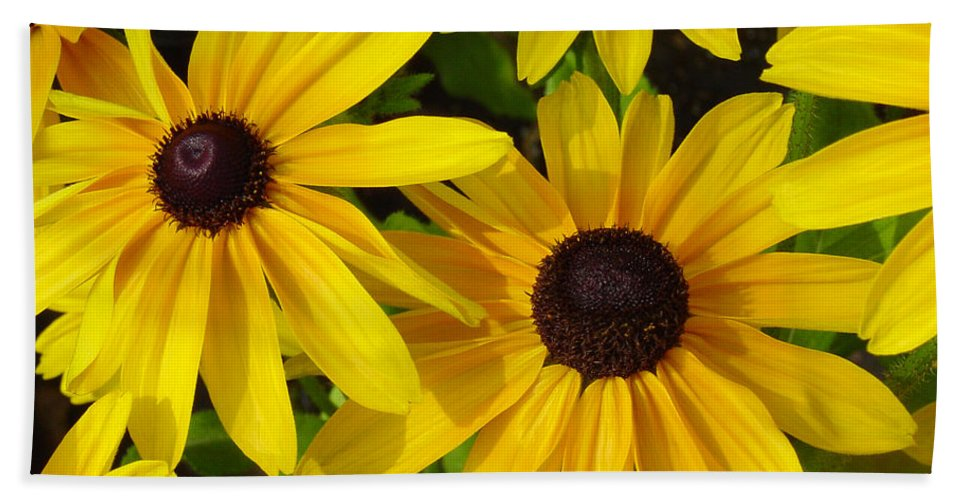 Black Eyed Susan Hand Towel featuring the photograph Black Eyed Susans by Suzanne Gaff