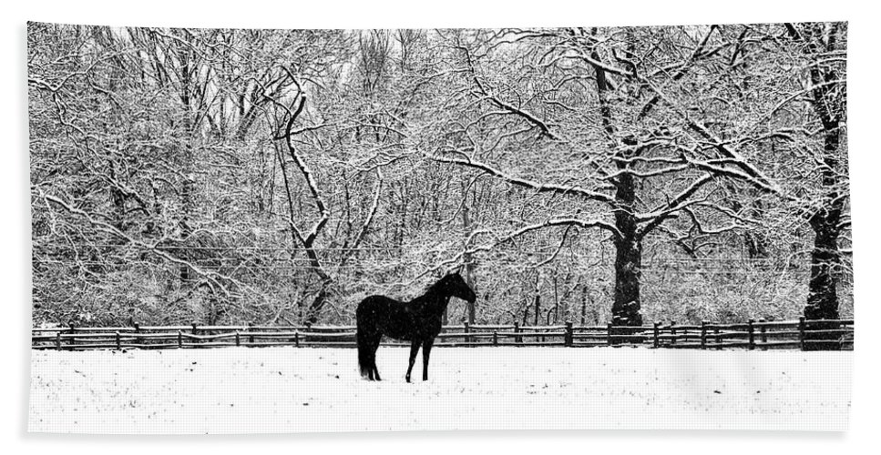 Black Horse In The Snow Hand Towel featuring the photograph Black Horse In The Snow by Bill Cannon