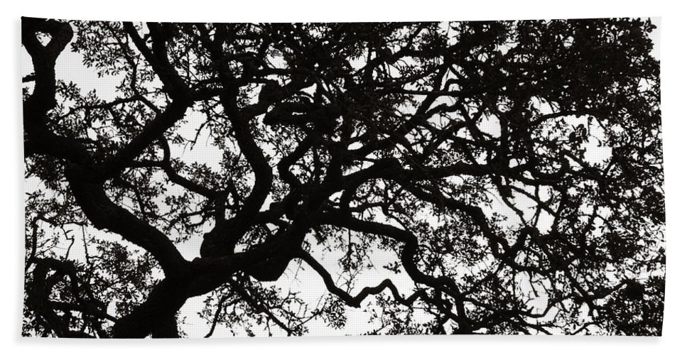 Black Hand Towel featuring the photograph Black Jack Oak Tree by Marilyn Hunt