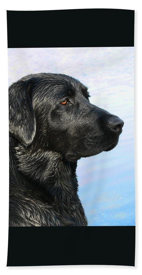 Labrador Retriever Hand Towel featuring the photograph Black Labrador Retriever After The Swim by Jennie Marie Schell