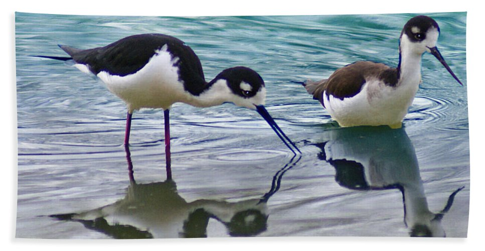 Birds Bath Sheet featuring the photograph Black Necked Stilts by Heather Coen