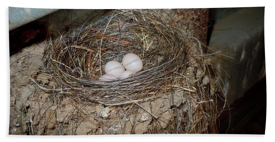 Fauna Hand Towel featuring the photograph Black Phoebe Nest With Eggs by Anthony Mercieca