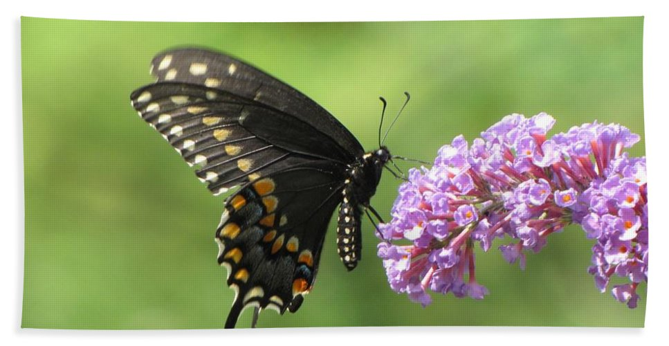 Black Swallowtail Hand Towel featuring the photograph Black Swallowtail Butterfly by MTBobbins Photography