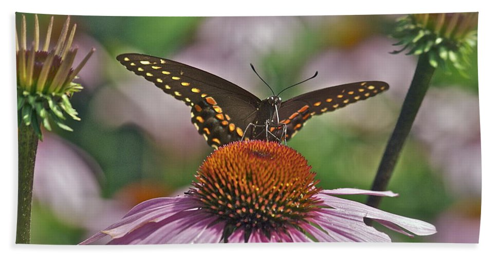 Cone Flower Bath Sheet featuring the photograph Black Swallowtail On Cone Flower by Michael Peychich