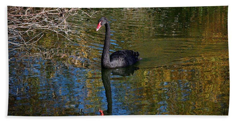 Black Bath Sheet featuring the photograph Black Swan 4 by Leticia Latocki
