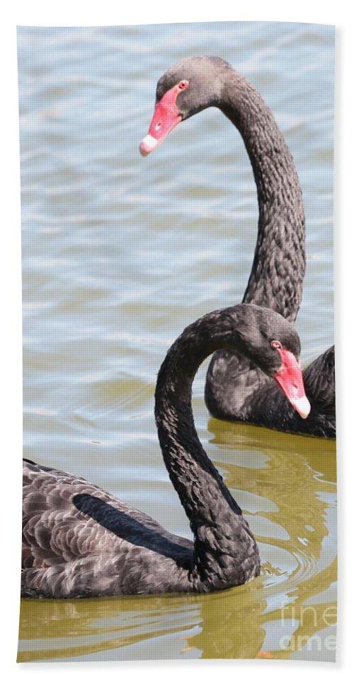 Black Swan Hand Towel featuring the photograph Black Swan Pair by Carol Groenen