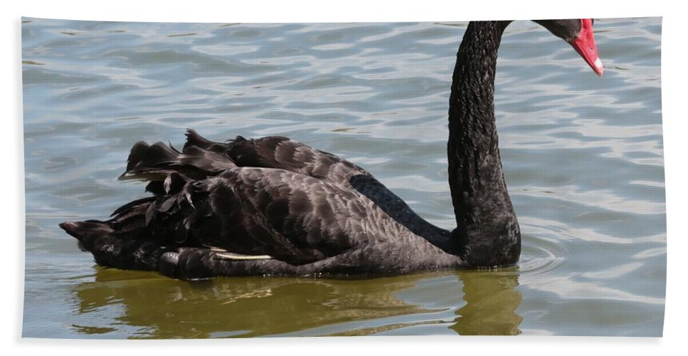 Black Swan Hand Towel featuring the photograph Black Swan Square by Carol Groenen