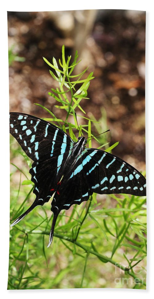 Butterfly Hand Towel featuring the photograph Black Swordtail Butterfly by Judy Whitton