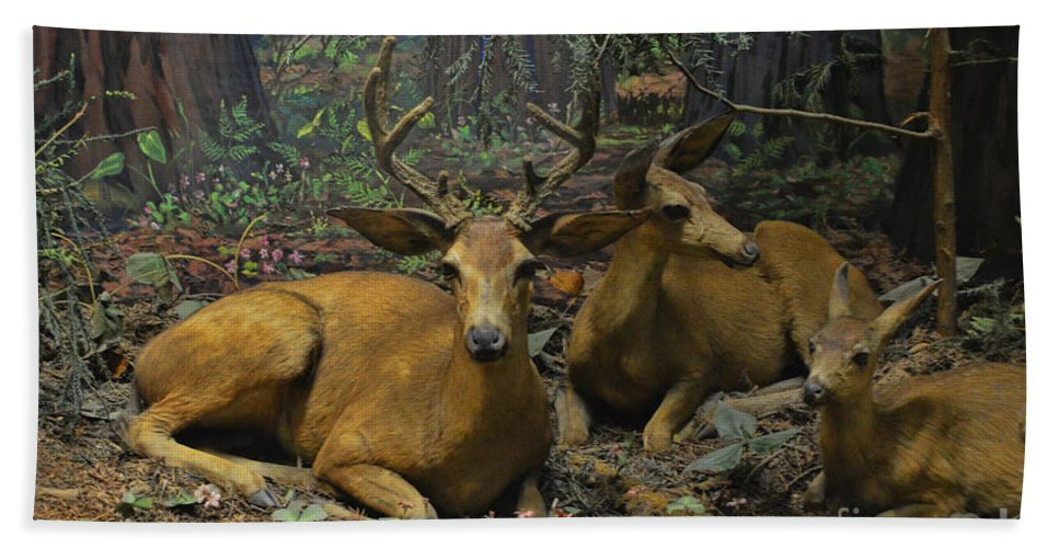 Black Tail Deer Bath Sheet featuring the photograph Black Tail Deer by Tommy Anderson