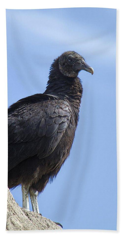 Coragyps Atratus Bath Sheet featuring the photograph Black Vulture - Coragyps Atratus by Kathy Clark