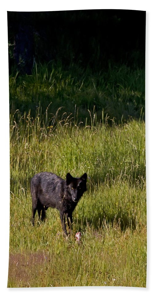 Wolf Hand Towel featuring the photograph Black Wolf  7251 by J L Woody Wooden