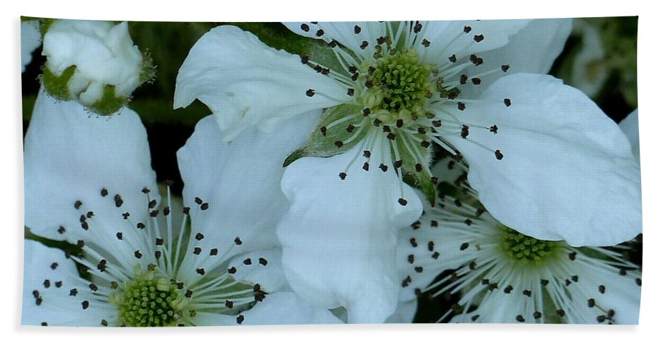 Outdoors Hand Towel featuring the photograph Blackberry Blossoms by Charles Ford