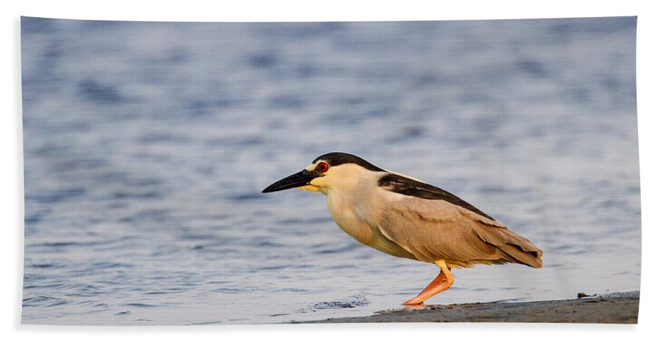 Doug Lloyd Hand Towel featuring the photograph Blackcrowned Night Heron by Doug Lloyd
