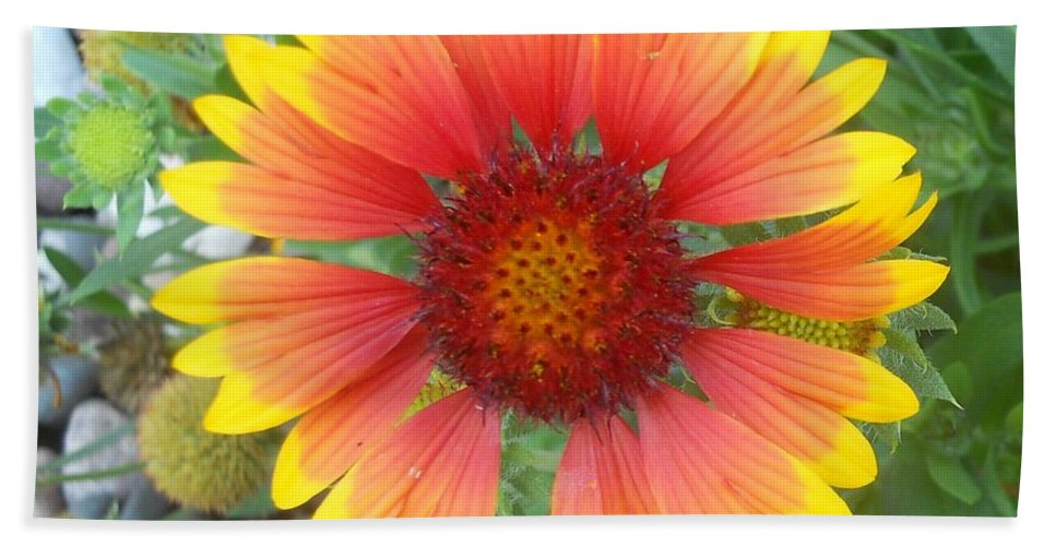 Flowers Hand Towel featuring the photograph Blanket Flower by Coleen Harty