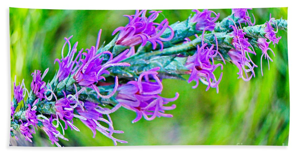 Blazing Star Hand Towel featuring the photograph Blazing Star by Gary Richards