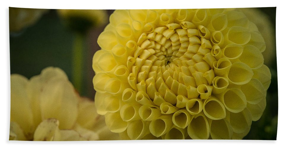 Dahlia Hand Towel featuring the photograph Blazing Yellow Dahlia by Joan Wallner