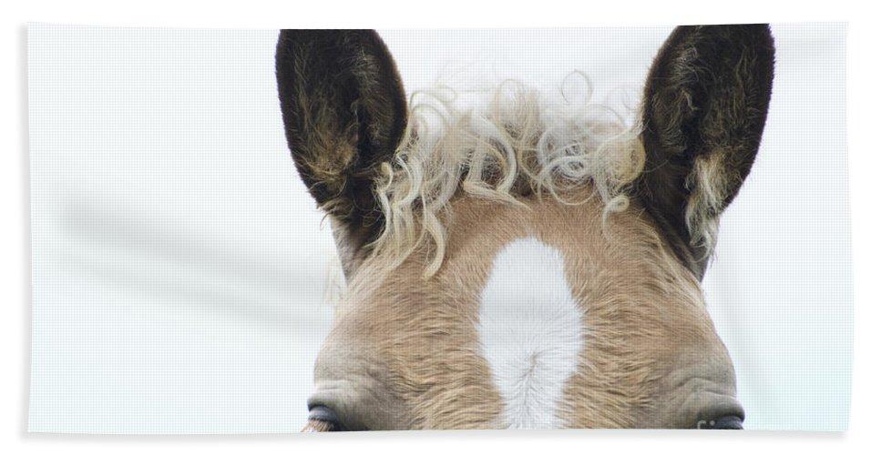 Horse Bath Sheet featuring the photograph Blonde Horse by Mats Silvan