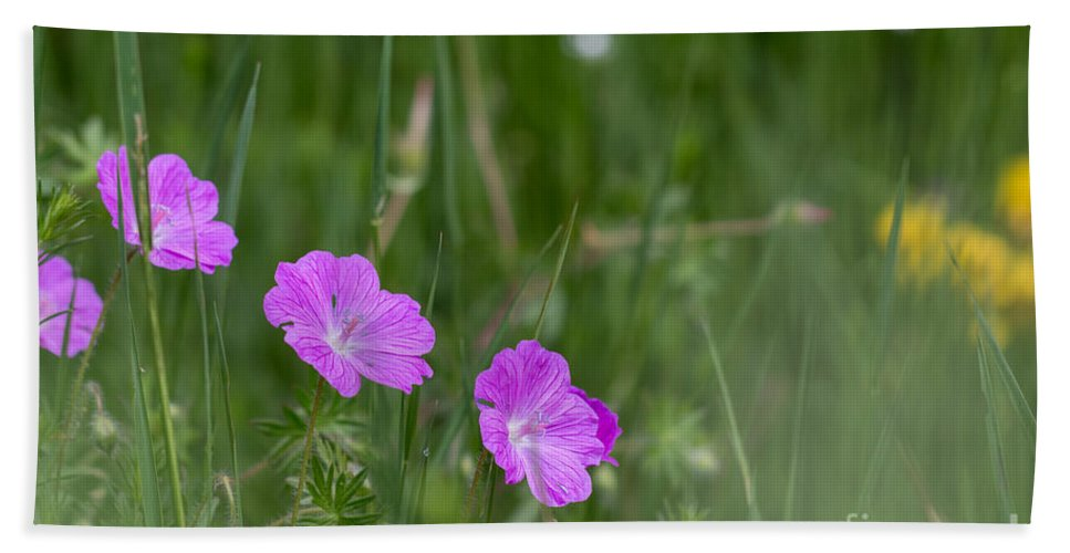 Bloody Cranesbill Bath Sheet featuring the photograph Bloody Cranesbill Wild Flowers by Jivko Nakev