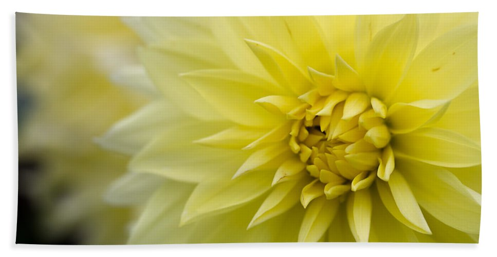 Blooming Bath Sheet featuring the photograph Blooming Yellow Petals by Kathleen Odenthal