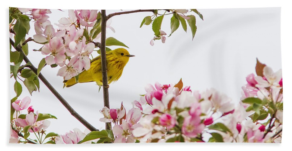 Warblers Bath Sheet featuring the photograph Blossom And Bird by Mircea Costina Photography