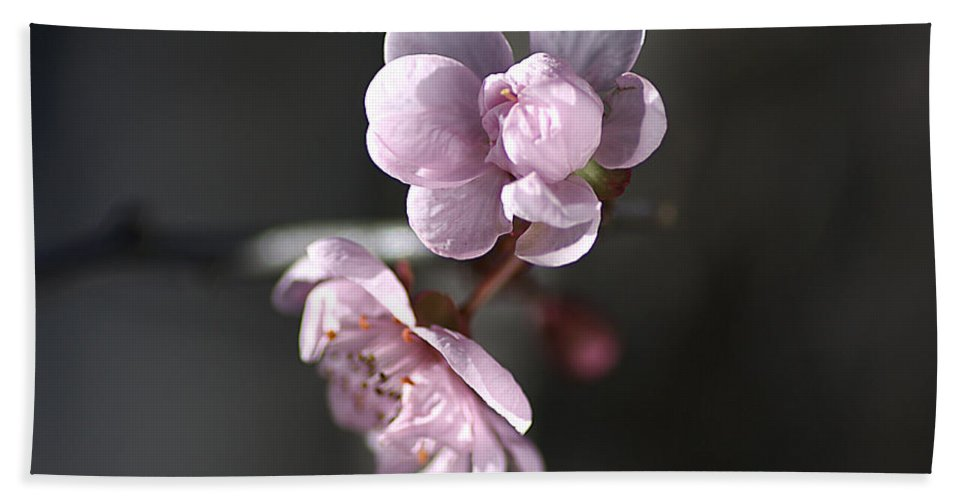 Blossom Hand Towel featuring the photograph Blossom Delight by Joy Watson