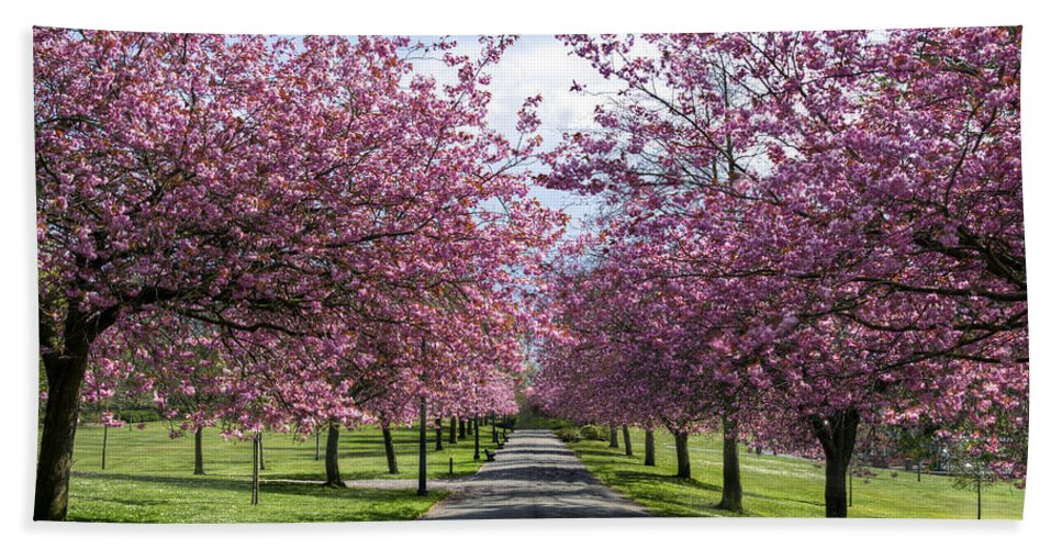 Blossom Bath Sheet featuring the photograph Blossom Lined Walk by Ross G Strachan
