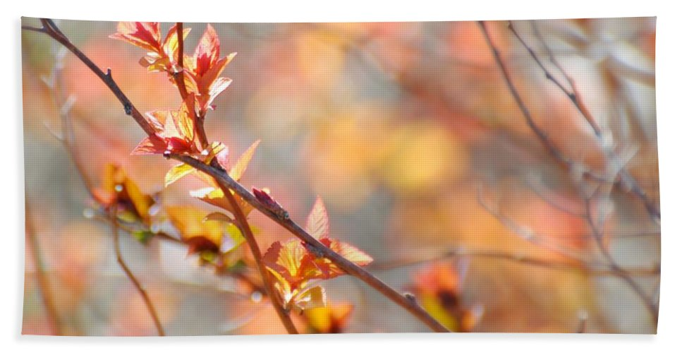 Spring Hand Towel featuring the photograph Blossoming by Diana Angstadt